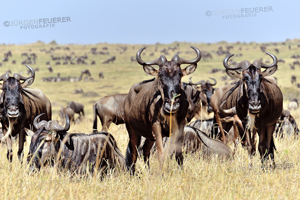 PhotoGallery Wildlife in Africa