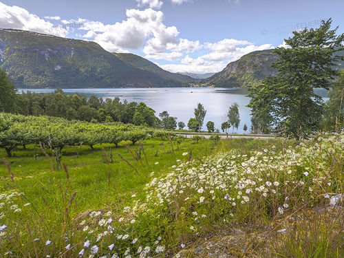 Flower meadow at the fjord