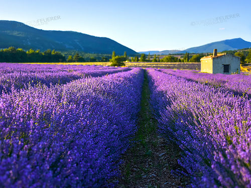 Splendorous Colour of Provence