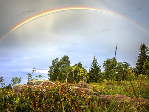 Rainbow in the Black Forest